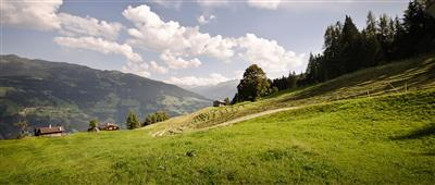 Green alpine pastures at the Hotel Kristall in the Zillertal