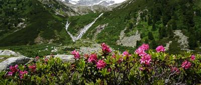 Waterfall in the mountains with blooming flowers
