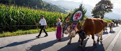 Almabtrieb mit geschmückten Kühen in Tirol